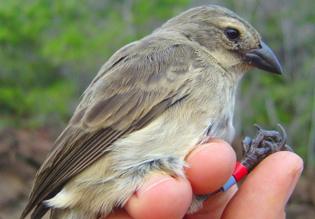 Un musgo de la Antártida revive, una roca rica en agua hallada en Brasil, y salvando uno de los aves de Darwin.