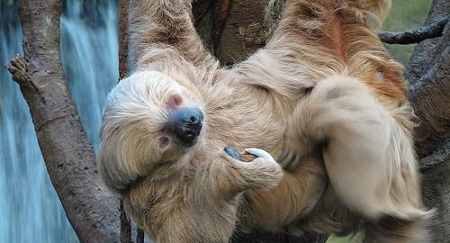 La vida cabeza abajo de los perezosos en Costa Rica, ráfagas cósmicas vistas desde Puerto Rico, y una Antártida mucho más cálida.