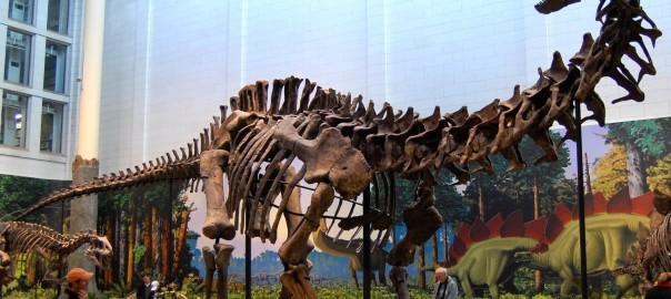 Un saurópodo hallado en Argentina, una de las primeras Americanas en México, y cómo proteger la mascota de la Copa Mundial