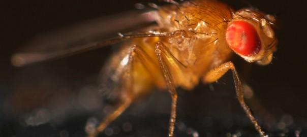 Centroamérica vulnerable al cambio climático, la revista Nature destaca a la ciencia latina, y recreando la enfermedad de Alzheimer en moscas.