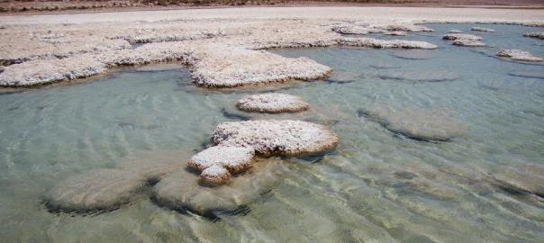 El universo microbiano de Atacama: la riqueza de lo que no se ve