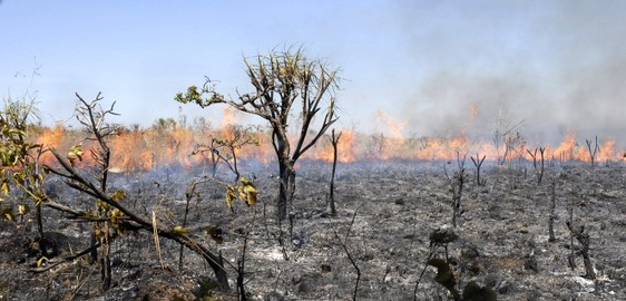 Hallan dinosaurio gigantesco en Argentina, un nuevo app horticultural en Chile, y la deforestación por quema en la Amazonía