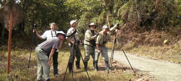 ¿Podría la observación de aves salvar los bosques de América Latina?