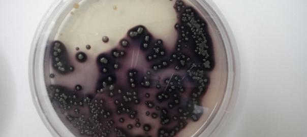 """Latinoamérica: el """"Dorado"""" de las moléculas bioactivas"""
