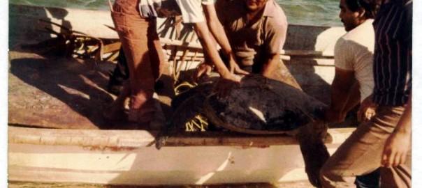 Las tortugas marinas resurgen del pasado