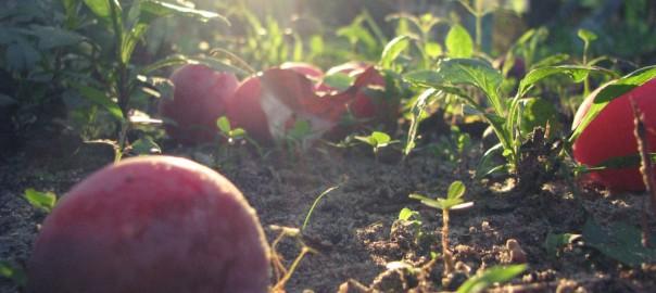 Pérdida y desperdicio de alimentos tiene un impacto en el medioambiente