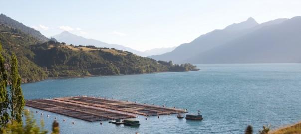 La industria salmonera en Chile: estrangulada por un bloom de algas