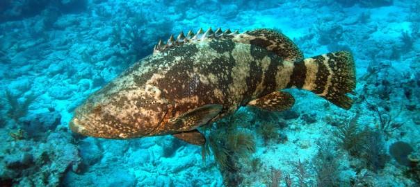 La agricultura podría resultar desastrosa para los arrecifes de coral de Cuba