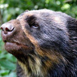 ¿Cuántos Latinoamericanos han ganado el premio Whitley para la conservación?