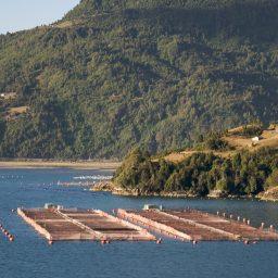 Consecuencias del uso de pesticidas en el cultivo de salmones en Chile