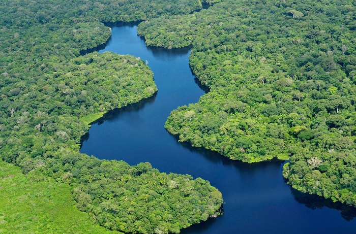 Studying climate change in the Amazon, cattle feed