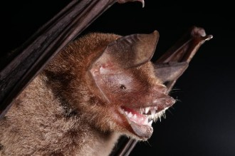 Colombia wants to repatriate scientists, dengue mosquito-eating bats in Nicaragua, and ecological conflicts in Latin America.