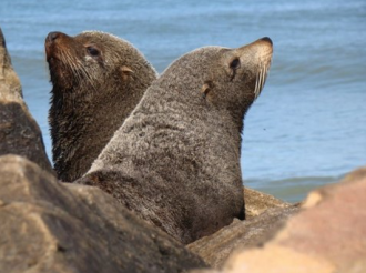 Seals brought TB to the Americas, Chile builds its largest wind farm, earthquake shakes Peru.