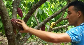Upcycling cacao waste into new products in Colombia