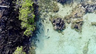 How drones are improving marine science research in Ecuador