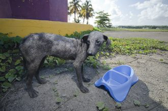 Stray animals abound in Puerto Rico following crises